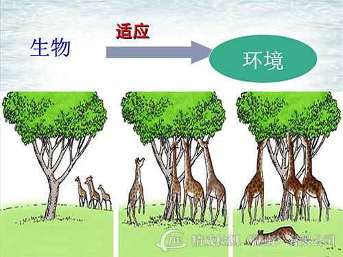 环境影响评估